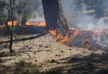 7 карталинцев наказаны за разведение огня