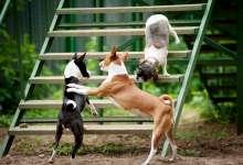 Сегодня день признания собаки